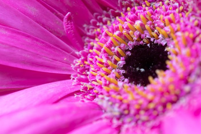 macro photo of a pink flower