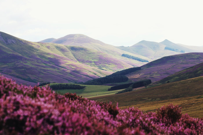 pink flowers in the foreground of a stunning mountainous landscape