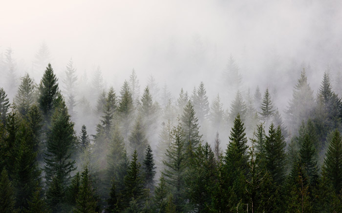 a stunning landscape photo with fog over a forest
