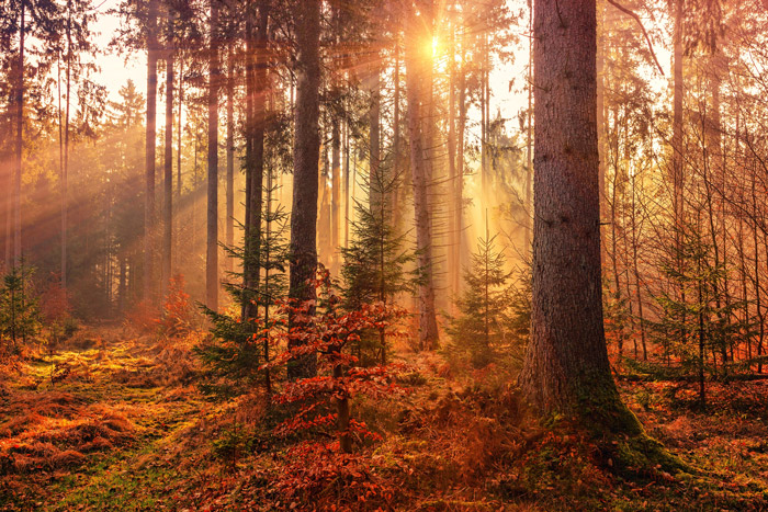 a beautiful view of light through a forest in autumn - stunning landscape photos