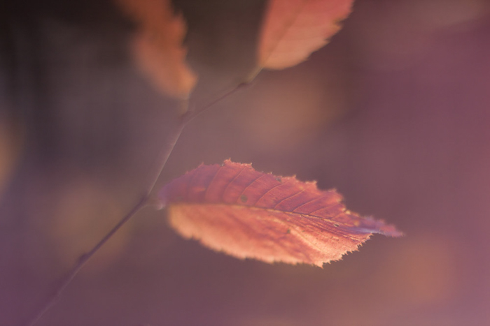 A close up of autumn leaves on a branch