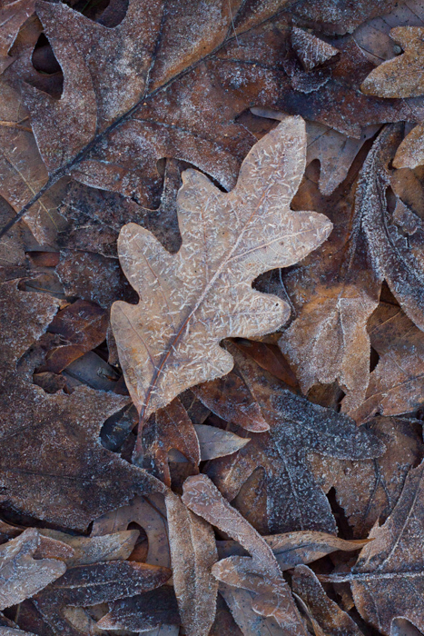 A close up of autumn leaves on the ground - beautiful pictures of leaves