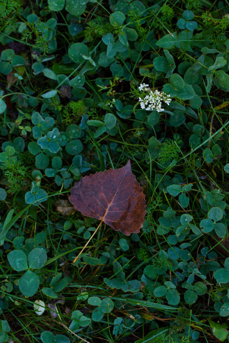 A close up of autumn leaves on the ground - leaf photography tips