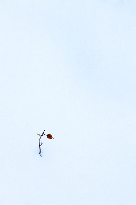 Minimalist photo of leaves on a branch in the snow