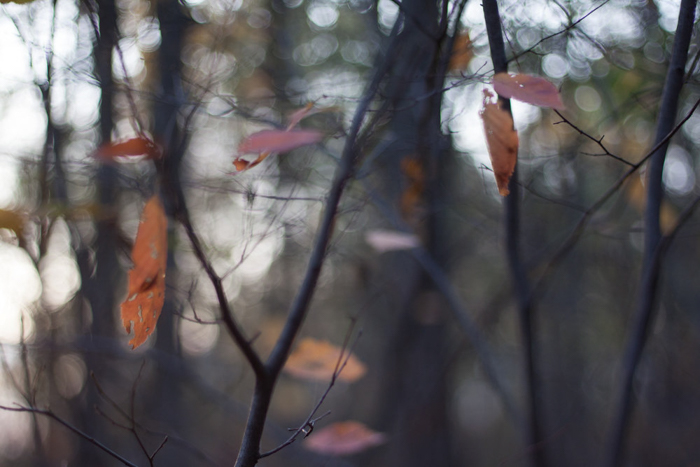 A close up of autumn leaves on a branch - leaf photography tips