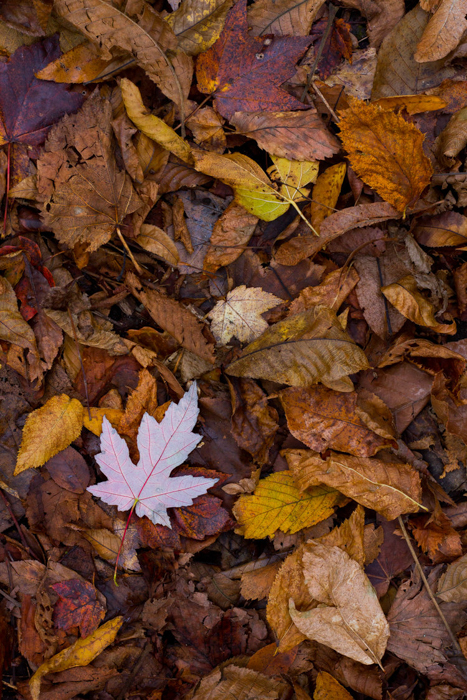 A close up of autumn leaves on the ground