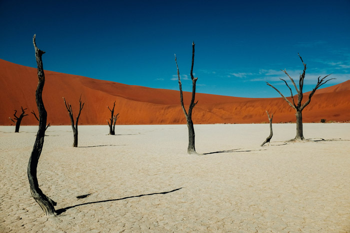 a beautiful shot of burnt trees in a desert landscape - stunning landscape photos