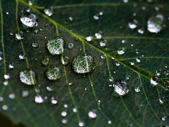 Beautiful macro photo of dew drops on a leaf - photography themes