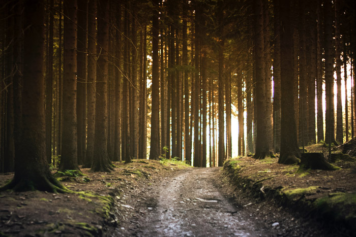 Atmospheric view of trees in a forest - photography themes