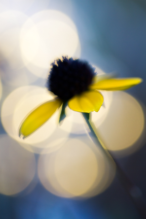 Stunning macro image of a yellow flower with bokeh background