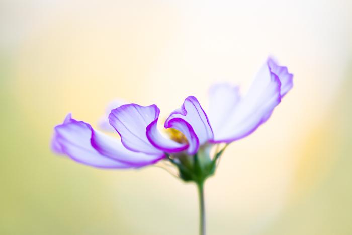 Stunning macro image of a purple flower