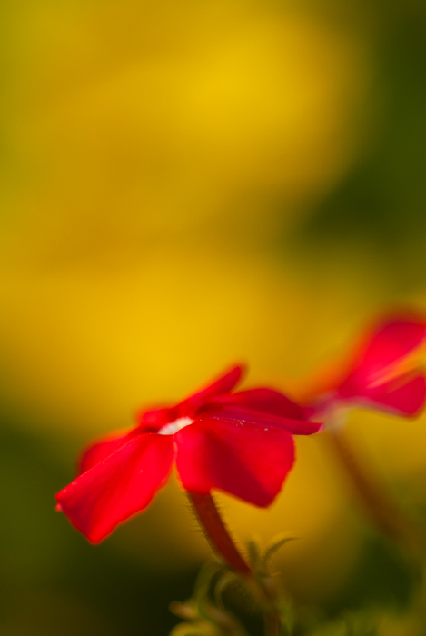 Stunning macro image of a red flower against a blurred background