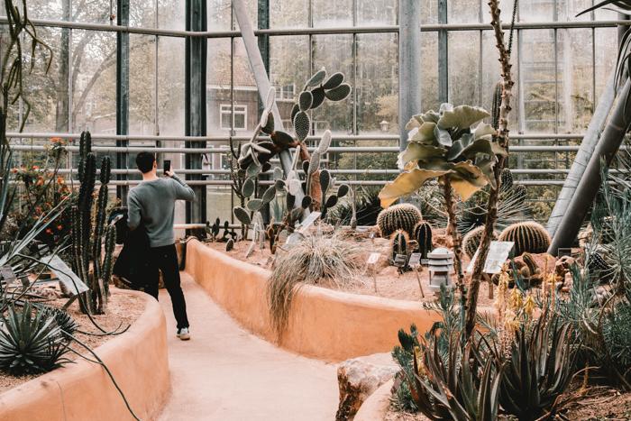 Interior of Hortus Botanicus, Amsterdam's premier botanical garden.