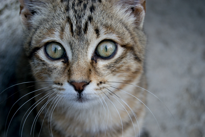 A close up photo of a cat with Clarity value: 0