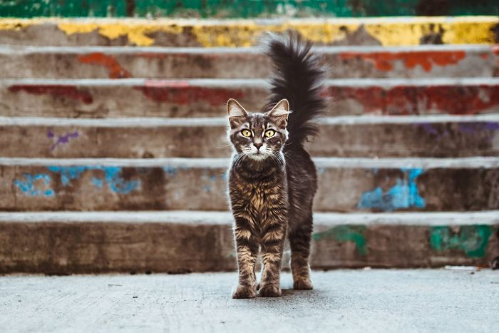 Photo of a cat in front of stairs