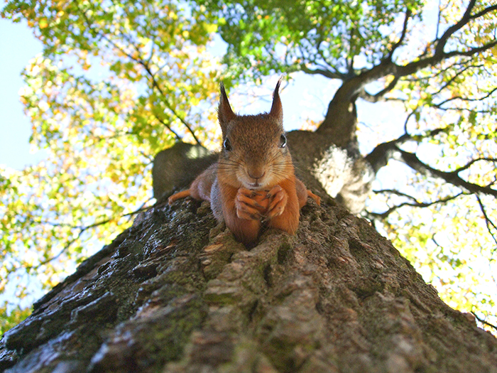 A humourous photo of a squirrel on a tree - funny animal photos