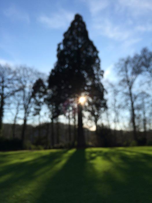 a blurry landscape scene shot with an iPhone 8 camera
