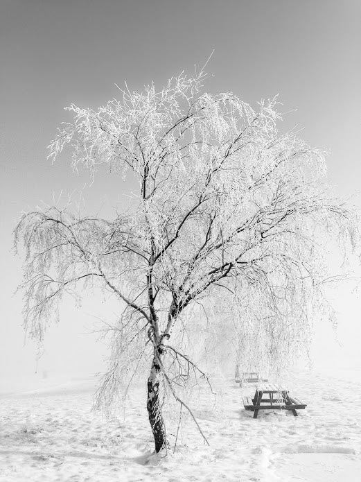 a snow covered tree taken with an iPhone 8 camera