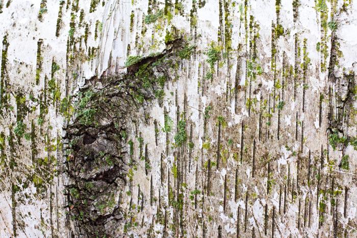 Macro shot of a tree bark - macro photography examples