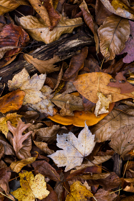 autumn leaves on the ground - macro photography examples