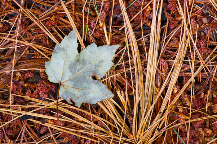 macro photography examples - autumn leaves