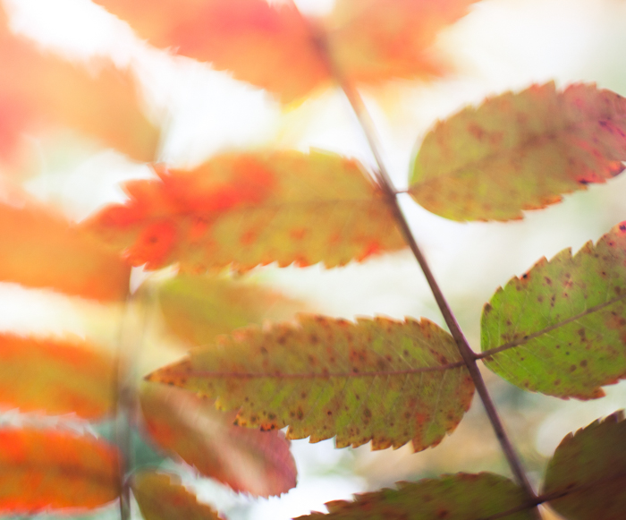 Macro shot of autumn leaves - macro photography examples