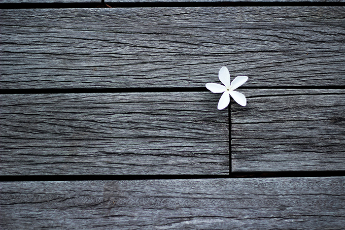 An aesthetic picture of a small white flower placed between wooden planks in black and white