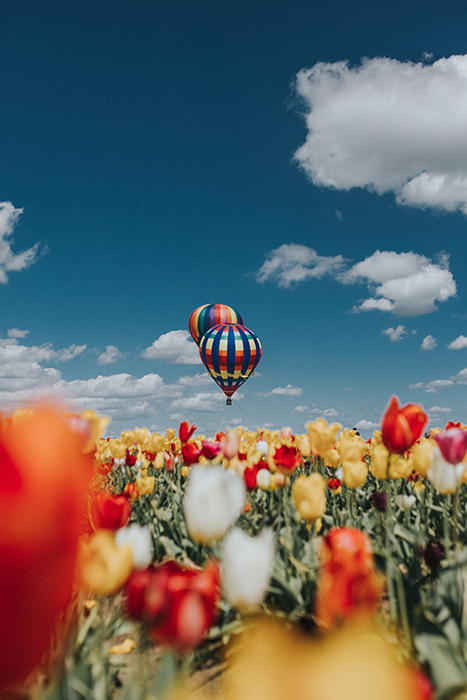 Aesthetic photo of colored hot air balloons flying over a field of tulips