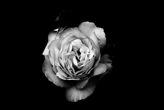 beautiful black and white flower photography
