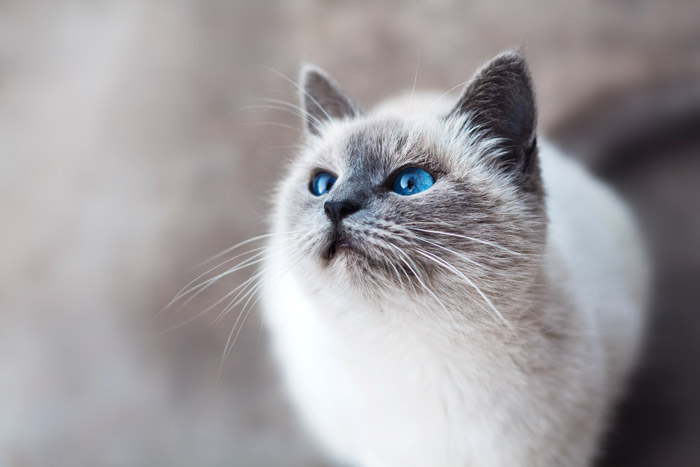 a cute brown and white cat - symbolism in photography