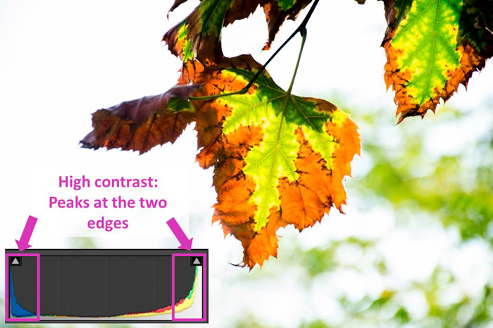 a leaf photo and lightroom histogram showing high contrast
