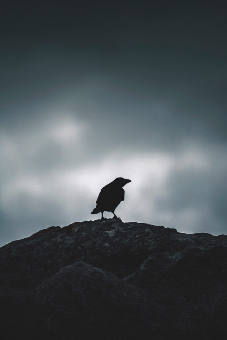 atmospheric silhouette of a crow standing on rocks - symbolism in photography