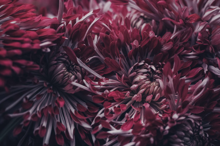 dark and moody shot of red and white flowers - symbolism in photography