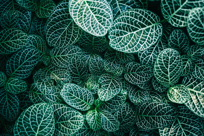 Overhead view of patterned leaves forming geometric shapes in nature