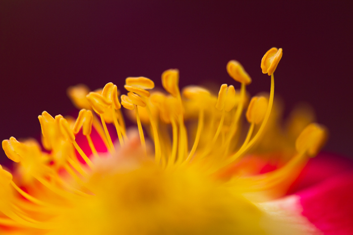 a macro photo of the centre of a flower