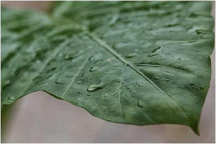 a close up of a dew dropped leaf - portrait photography pricing