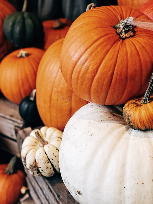 a still life of different shaped and sized pumpkins - symbolism in photography
