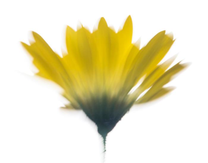 blurry macro photo of a flower, unique photos