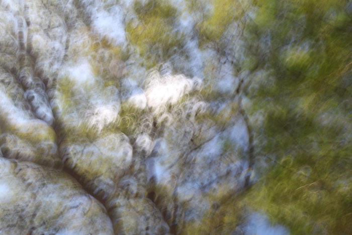 the branches and leaves of a large tree blurred by intentional camera movement