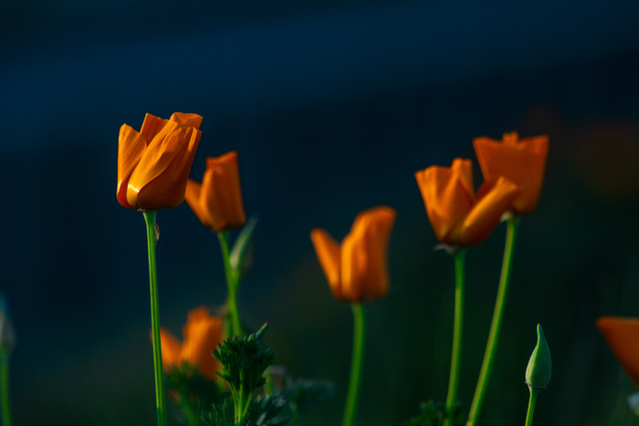 Orange flowers with bright green stems