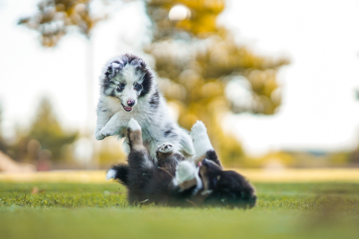 Photo of dogs playing on a field