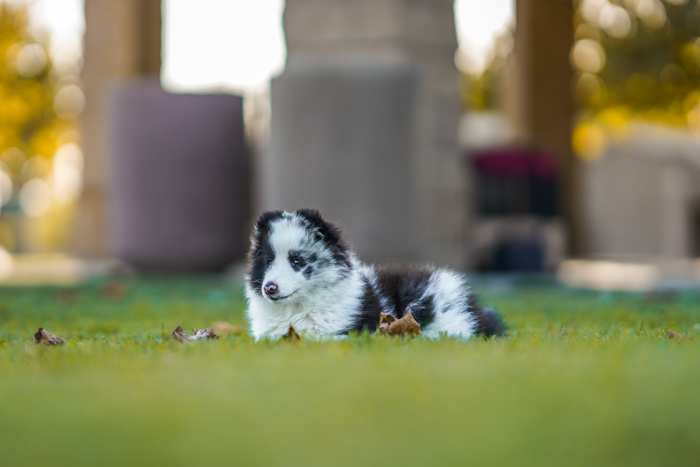 Photo of a dog lying in the grass on a field