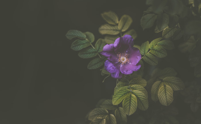 Photo of a purple flower in landscape format