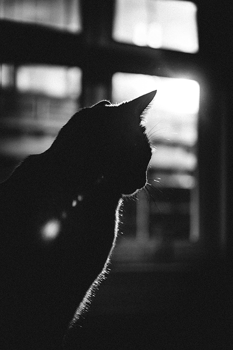 Black and white photo of a cat with strong backlight