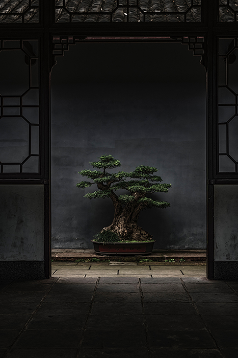 Photo of a bonsai tree under top natural outdoor light