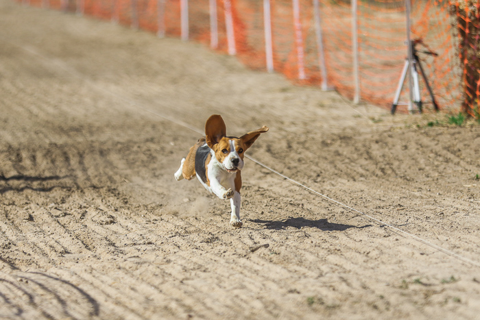 Photo of a puppy running on a dirt road