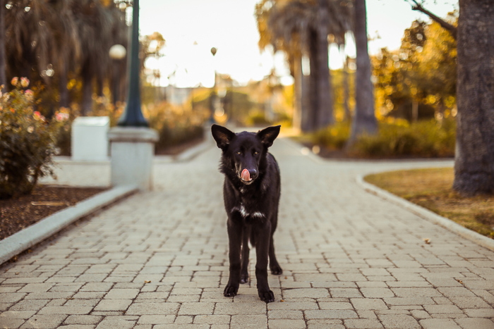 Photo of a dog in the middle of a park