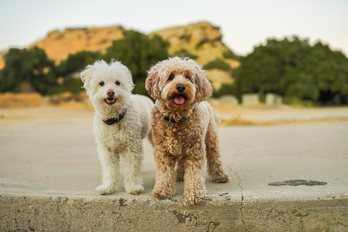 Two cute dogs standing next to each other