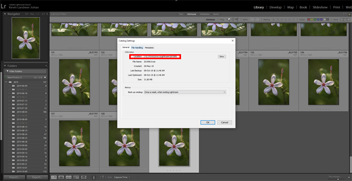 Lightroom screenshot of catalogue