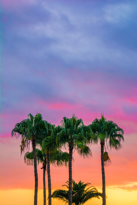 a group of palm trees in front a colorful sky at sunset